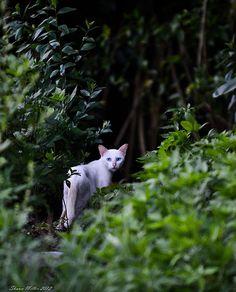 Wild female Cat of okinawa - | by Okinawa Nature Photography