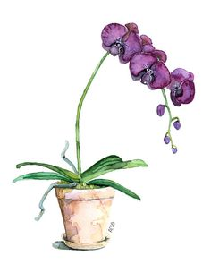 Potted Orchid Painting Print titled Purple