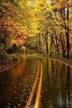of Outstanding Photos from Master Photographers Autumn Rain. My goodness! Can this scenery get anymore beautiful? My goodness! Can this scenery get anymore beautiful? Beautiful World, Beautiful Places, Beautiful Pictures, Beautiful Roads, Beautiful Scenery, Wonderful Places, Beautiful Forest, Stunningly Beautiful, Amazing Photos