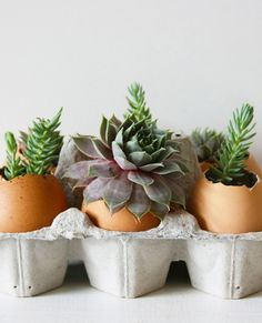 I'll be the first to admit that keeping plants alive is not my strong suit. After years of denial—and time, money, and effort wasted—I now stick to a strict succulent-only rule when bringing plants home. For a twist on regular potted succulents, I decided to plant some in eggshells. It was a fun way to combine my love of food and cooking with my (relatively) newfound success caring for succulents. The whole project was quick and easy and the finished product now happily rests on the…