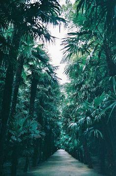 Tropical getaway.