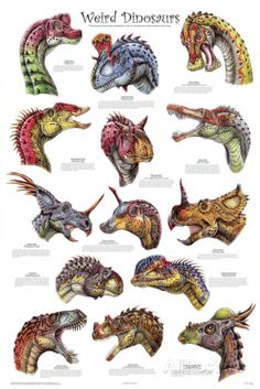 Laminated Weird Dinosaurs Educational Paleontology Science Chart Poster Poster a Dinosaur Fossils, Dinosaur Art, Dinosaur Types, Dinosaur Garden, Dinosaur Pictures, Dinosaur Skeleton, Dinosaur Crafts, Prehistoric World, Prehistoric Creatures