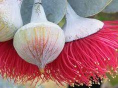 wild flowers - Google Search