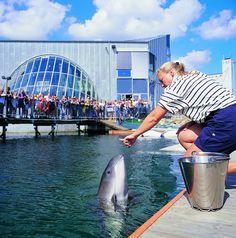 Aquatics show at the Fjord og Bælt Aquarium in Kerteminde #visitfyn