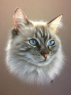 pastel chat birman Portrait de chat sacré de Birmanie - cat art - art animalier - artiste animalier #CatArt