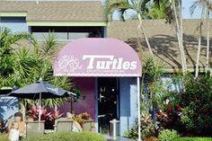 Turtles in Siesta Key (One of our favorite restaurants from our honeymoon.)