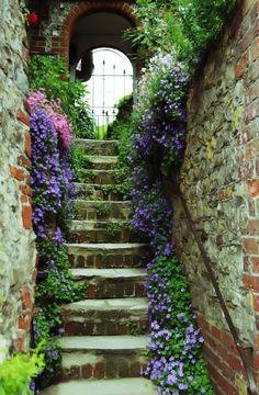 Steps to kitchen garden