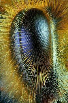 La Familia de la Apicultura - The Beekeeping of Family: Ojo de abeja obrera - Eye of worker bee - Abeille . Beautiful Bugs, Amazing Nature, Photo Oeil, Regard Animal, Fotografia Macro, Macro And Micro, Bee Art, Bugs And Insects, Weird Insects
