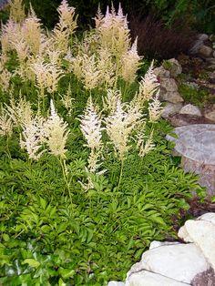 Tieňomilné rastliny do okrasnej záhrady