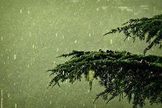 Incredible #india Mcleodganj Himachal Pradesh  #photography #travel and #tourism