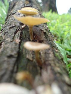 Moshroom :)