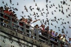 Every evening at sunset, more than 250,000 Mexican free-tailed bats emerge from crevices found in the Waugh Drive Bridge. These creatures are non-migratory and call the bayou home year-round. You can learn more about the bats through interpretive signage found at the site. Stop by any night and view this amazing sight!