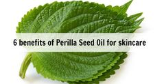 Today we are sharing with you a fabulous oil that you may not have heard of before – Perilla Seed Oil. We'll be delving into the benefits of perilla seed oil for skin and skincare, what it is and how to use it. As a School we love keeping up to date with new and …