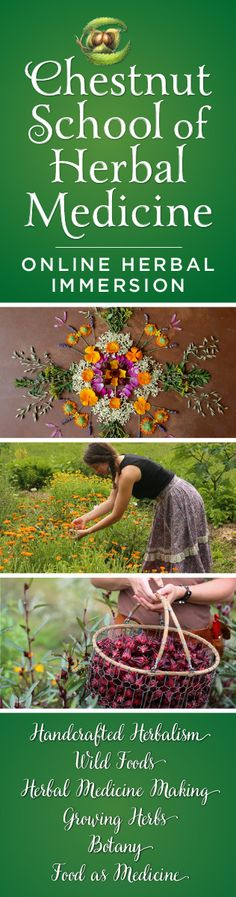 The Herbal Immersion Program is the most comprehensive online course teaching the vital skills of handcrafted herbalism--growing herbs, making medicine, foraging, botany, and therapeutics. Pre-registration sale running now through April 17th!