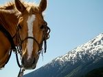 Horseback riding in Alaska