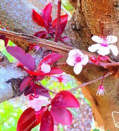 Flowers, Plants, Plant, Royal Icing Flowers, Flower, Florals, Floral, Planets, Blossoms