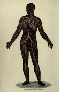 Wonders of the Human Body, A. Le Pileur, illustrated by Léveillé, 1871.