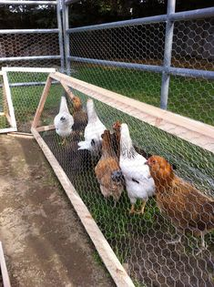 This is a great way to have your chickens in your garden without having them eat everything!