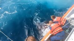 U.S. Coast Guard crew members save an 800-pound leatherback turtle entangled in fishing gear off the South Jersey coast. Credit to Reuters.