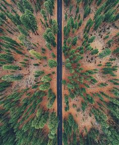 Aerial Shot Of An Oregon Forest