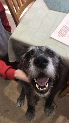 Thought Id post my good boy! Meet Hercules the black lab/Irish wolf hound. https://ift.tt/2pFZ1YS