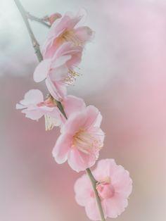 Photograph tenderness by Miyako Koumura on 500px