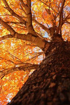 Autumn Air - Fall foliage, vibrant! orange, gold