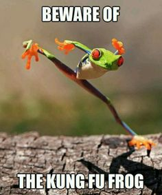 Beware of the Kung Fu frog
