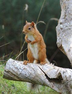 I miss my Squirrel E. Nutkins :-(