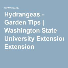 Hydrangeas - Garden Tips | Washington State University Extension