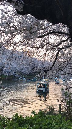 Japan Places To Visit, Places To Travel, Countries Of Asia, Batman Pictures, Beautiful Places In Japan, Tokyo Japan Travel, Tokyo Skytree, Japan Street, Japanese Photography