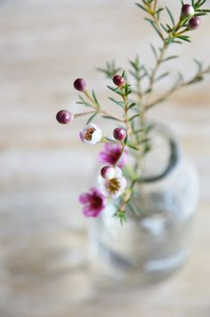 Wax Flowers - delicate and perfect for floral crowns Flowers In Jars, Wax Flowers, Little Flowers, Beautiful Flowers, Wedding Flowers, Fresh Flowers, Cactus E Suculentas, Deco Floral, Ikebana