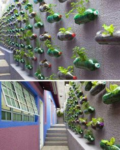 Herb wall from recycled soda bottles...awesome!