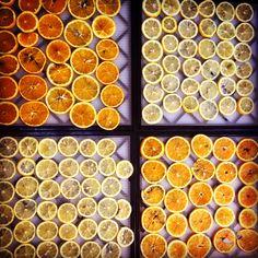Lemon & orange for dried