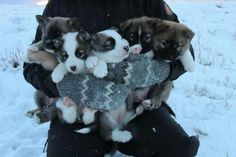 Load Of Puppies | Cutest Paw