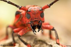 Awesome Macro Photography of Insects