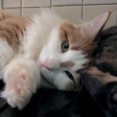 André Vosloo Kitty, Cats, Pictures, Animals, Cuddle Cat, Gatos, Animales, Kitty Cats, Animaux