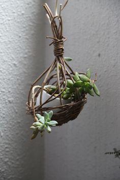 Succulent inside birdgage