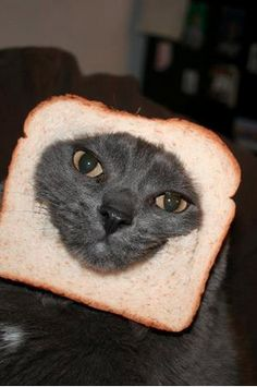 Breaded cat number 1 :// My kitty Jacky Phatpacky
