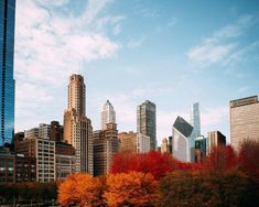 Fall Chicago Photography For a brief period in time, nature and Chicago becomes in accordance with each other. Bright reds, yellows and orange strewn with life throughout the city; Chicago Photography, Autumn Photography, Fine Art Photography, Historical Architecture, Lake Michigan, Daydream, San Francisco Skyline, New York Skyline, Sunrise
