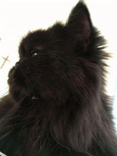 weggieboy's blog | surviving retirement with two cats