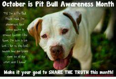 I love my Pitt bull!!!