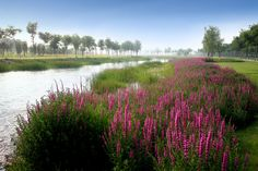 turenscape sanlihe river ecological corridor 12 « Landscape Architecture Works | Landezine