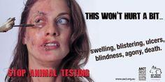 Não aos testes em animais!