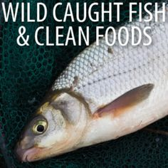 Dr Oz: Wild Caught Fish, Ghee Fat Ayurvedic Medicine & Clean Eats Food -  Dr Alejandro Junger - Clean Eats Food: How To Restart & Heal Your Body - April 29, 2014