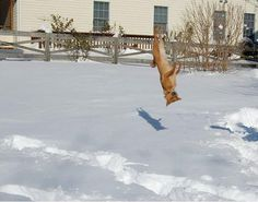 This dog who has no idea how he got here.   37 Animals Who Failed So Spectacularly They Almost Won