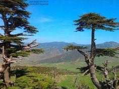 الطبيعية العالمية الجزائر 854845150.jpg