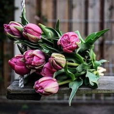 Pink Tulips, Still Life, Congratulations, Presents, Organic, Country, Rose, Flowers, Plants