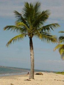 ich genieße die Palmen