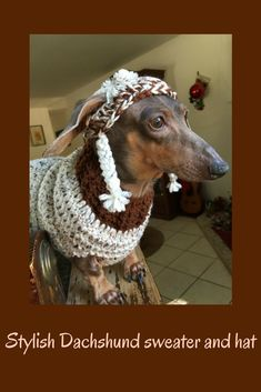 Very cute sweater and hat for dachshunds! #affiliate